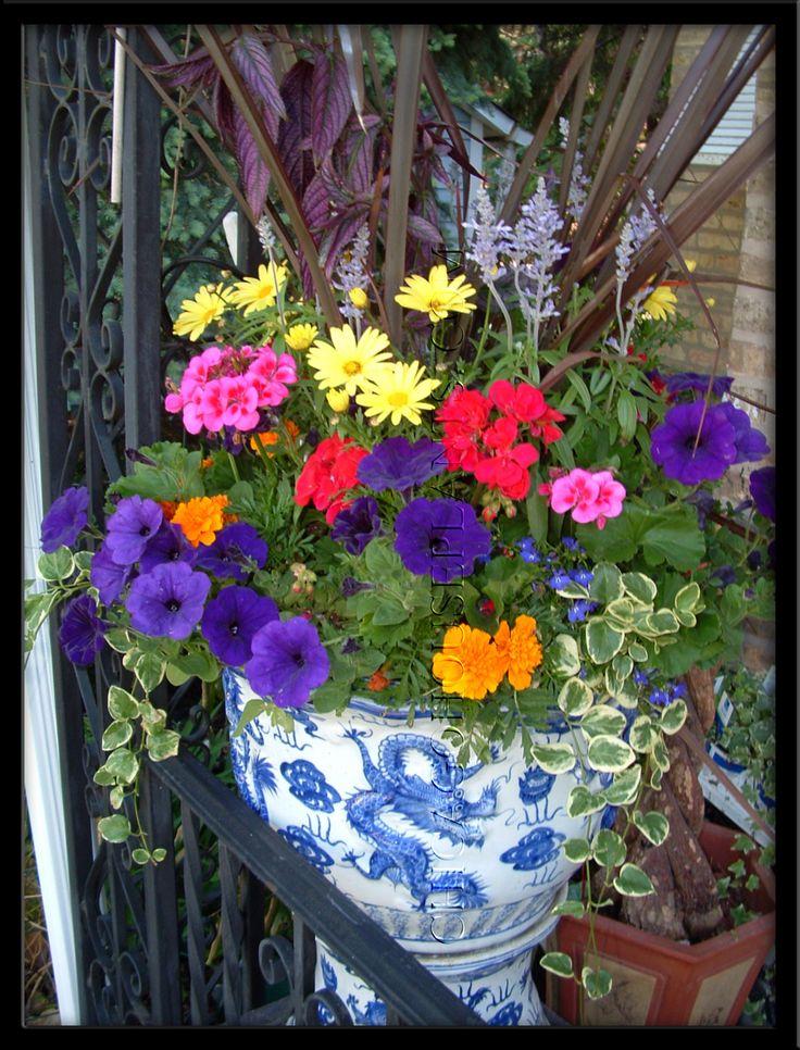 Argeranthium, trailing petunia, geranium, sweedish ivy, marigold for pops of color...