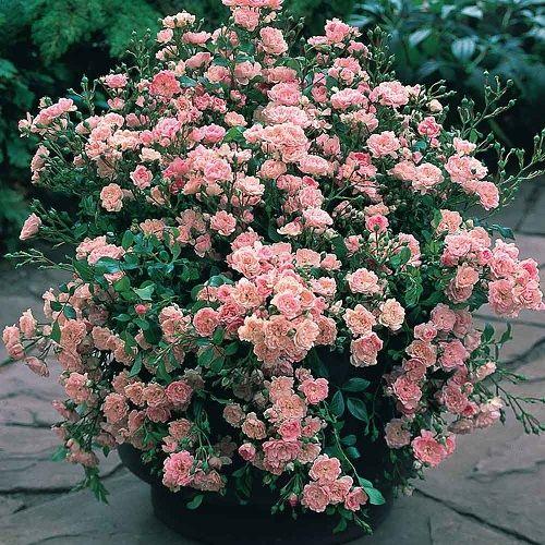 mejores 93 imágenes de rosass en pinterest | amarillo, de ti y