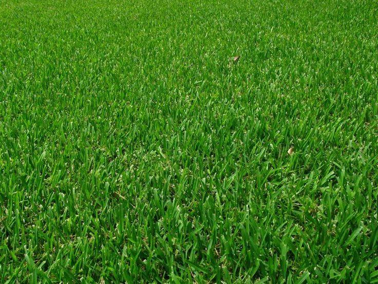La rénovation de la pelouse en 7 étapes