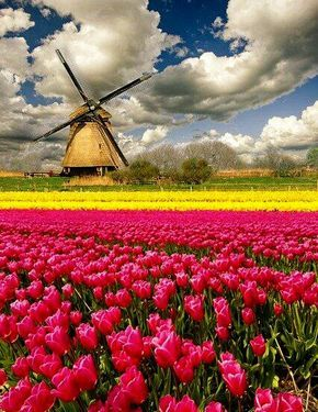 Holland -- beautiful country-side! Especially from the air in spring and the tulips are blumming #travel #wonderfulvacations #holland