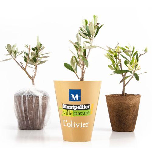 petit arbre en pot biod gradable olivier jeunes plants d 39 arbres et d 39 arbustes. Black Bedroom Furniture Sets. Home Design Ideas