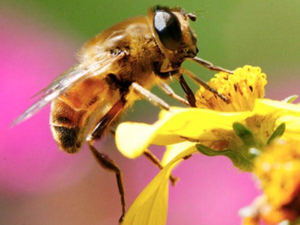 frelon asiatique gu pe fabriquer un pi ge pour aider les abeilles truc bee y insects. Black Bedroom Furniture Sets. Home Design Ideas
