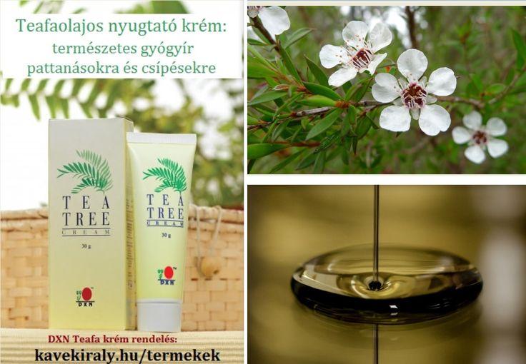 DXN Teafaolajos nyugtató krém: http://www.kavekiraly.hu/blog-2016-01-24-DXN_Teafaolajos_nyugtato_krem__termeszetes_gyogyir_pattanasokra_es_csipesekre