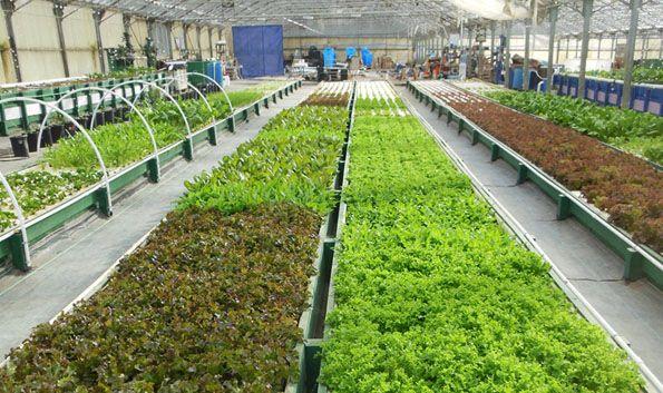 Ouroboros farms california the aquaponic farming for Hydroponics aquaponics