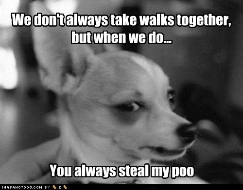 tehhheeePoint Of View, Funny Pictures, Too Funny, Dogs Humor, Funny Dogs Pictures, So Funny, Weights Loss, Dogs Face, Animal