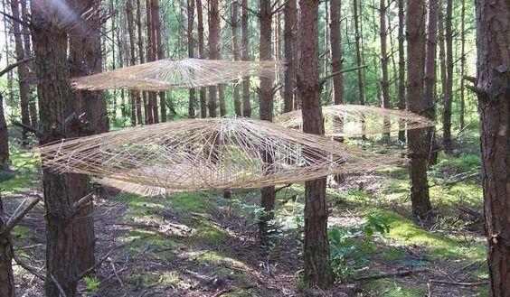 Miroslaw Maszlanko - Tomography of a tree