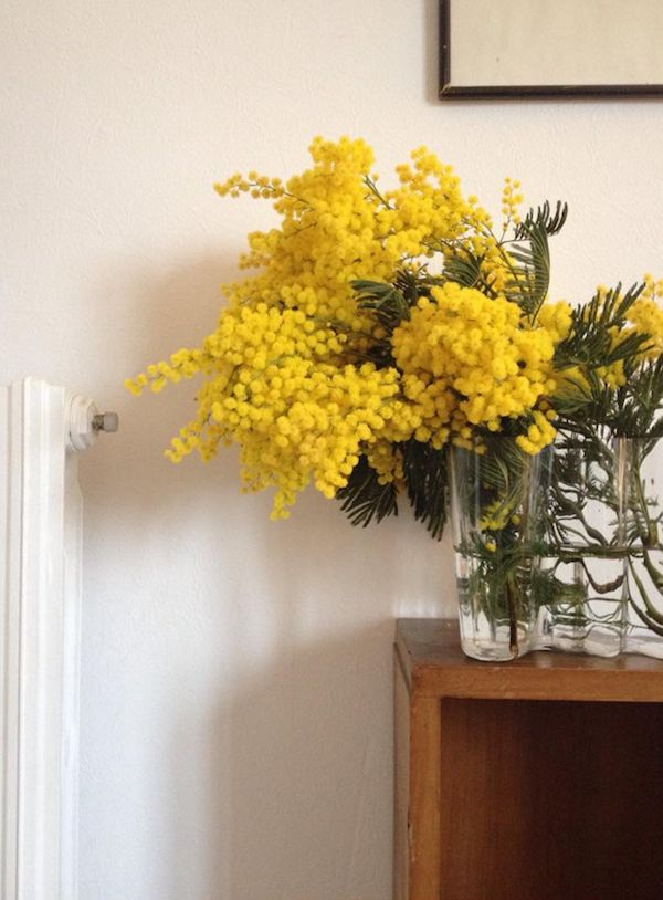 mimosa flowers by Mary Gaudin