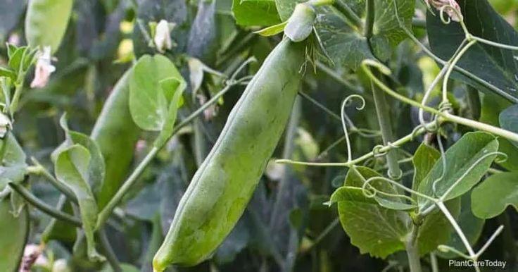 How to add nitrogen to soil in 2020 fertilizer for