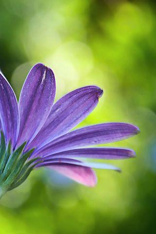 Flowers iPhone Wallpaper | Mariusz Dabrowski Blog