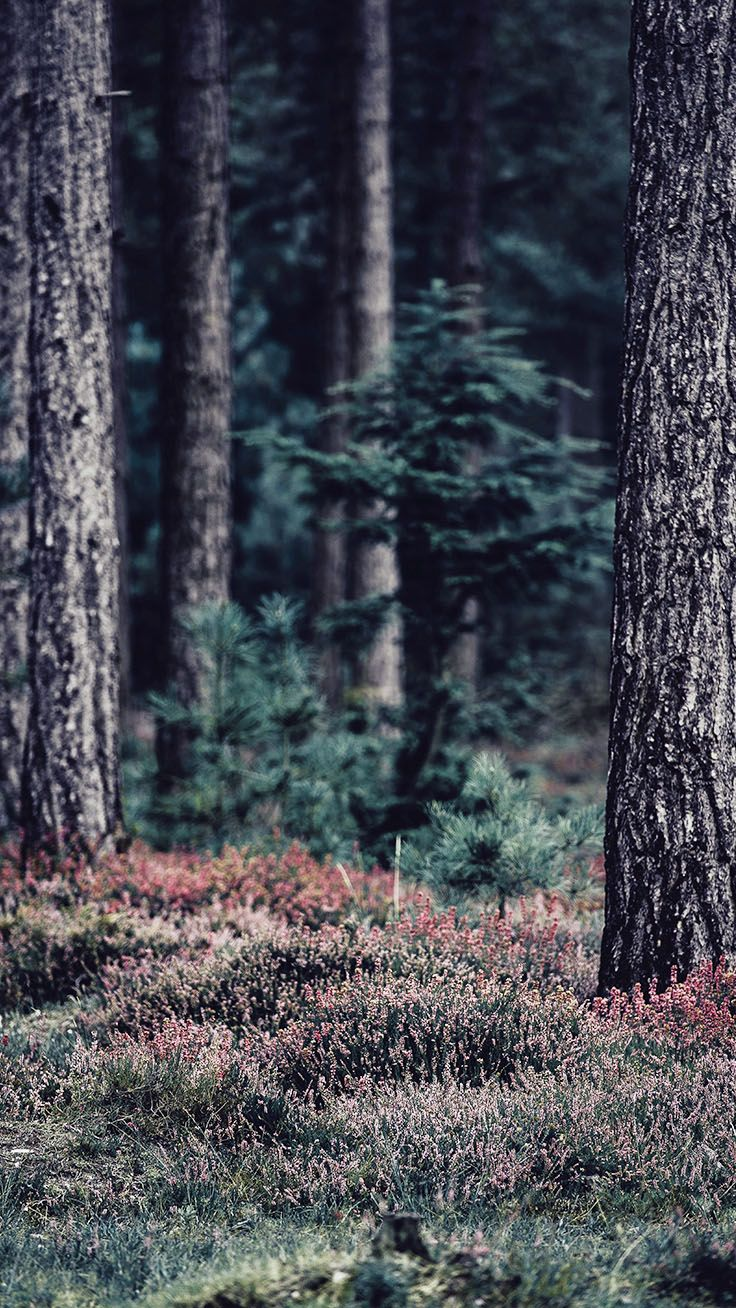 Bringing The Forest To You With 9 Free Iphone X Wallpapers Preppy Wallpapers Nature Wallpaper Nature Iphone Wallpaper Preppy Wallpaper