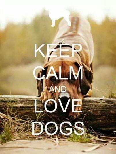 how to make a crazy dog calm down