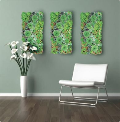 Beautiful Stunning Living Wall Of Succulents; Hang It Outside In
