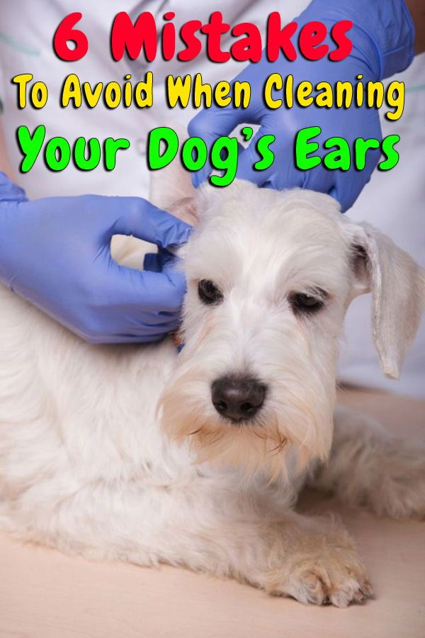 6 Mistakes To Avoid When Cleaning Your Dog S Ears At Home In 2020
