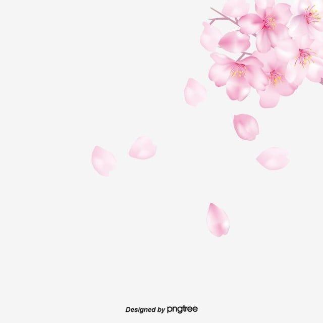 Elementos Que Caen De Flor De Cerezo Rosa Imagenes Predisenadas De Flor De Cerezo Pintado Color Durazno Png Y Psd Para Descargar Gratis Pngtree Cherry Blossom Background Cherry Blossom Petals