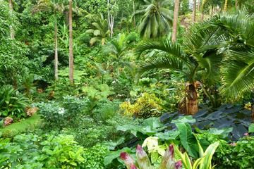 This tour includes three magnificent #Barbados gardens: Hunte's Garden, Orchid World and the Flower Forest.