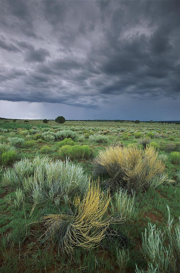 ✮ Sage and storms clouds near Gallup, New Mexico