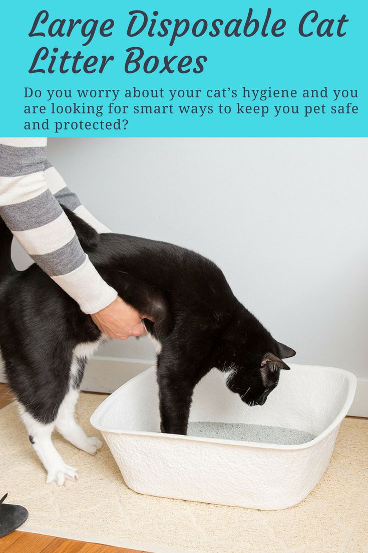 """Are you a cat lover who wants to keep your home litter free and smelling fresh? Then we've got a great news for you!  This special offer will help you reduce cat litter scatter instantly AND helps you reduce cat odor.  It's called """"Easyology Disposable Cat Litter Box"""" and its ON SALE on Amazon today!"""