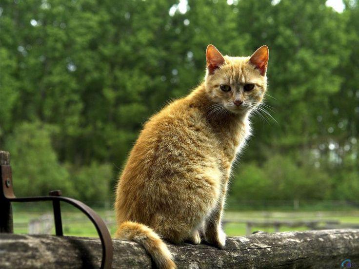 ipad skrivbordsunderlägg - Katter: http://wallpapic.se/djur/katter/wallpaper-32043