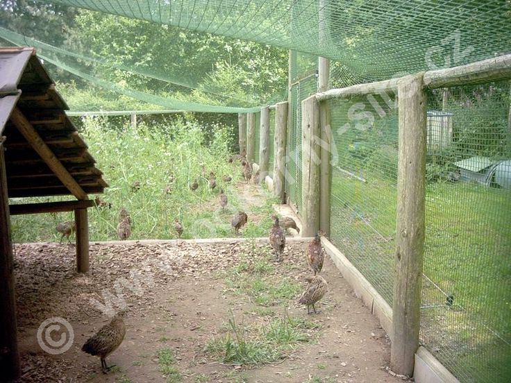 16 best Aviary design to go by images on Pinterest