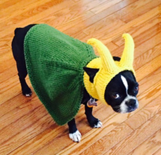 527 best images about voor hond of kat on pinterest - Dog hat knitting pattern free ...