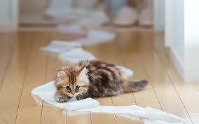 cute kitten images - Google Search