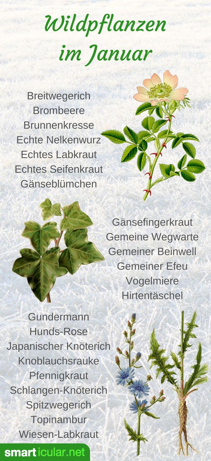 Schmackhaftes aus Feld und Flur: Wildpflanzen im Januar