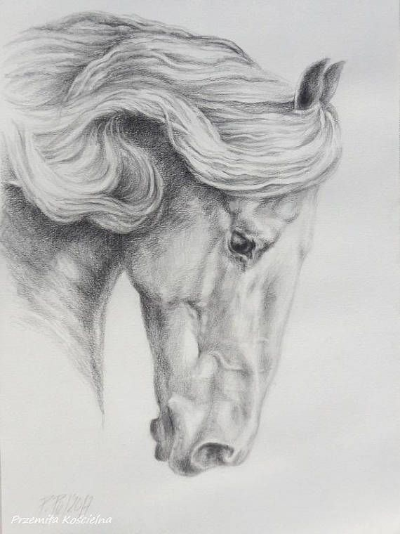 Friesian Horse Pencil drawing on white paper Hand drawn horse #friesian #horse #blackwhite original #drawing #Zen