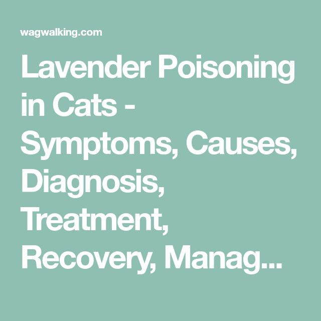 Best 25+ Cat symptoms ideas on Pinterest Allergies in dogs - food poisoning duration