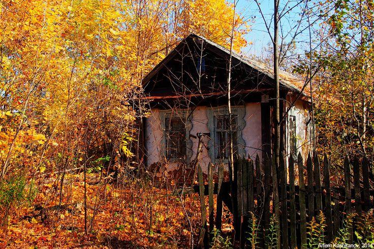 Фотография брошенного дома и заросшего огорода осенью