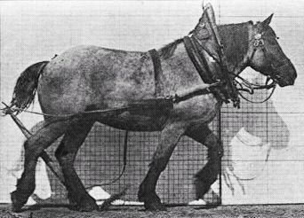 Les allures des chevaux - Hippologie.fr