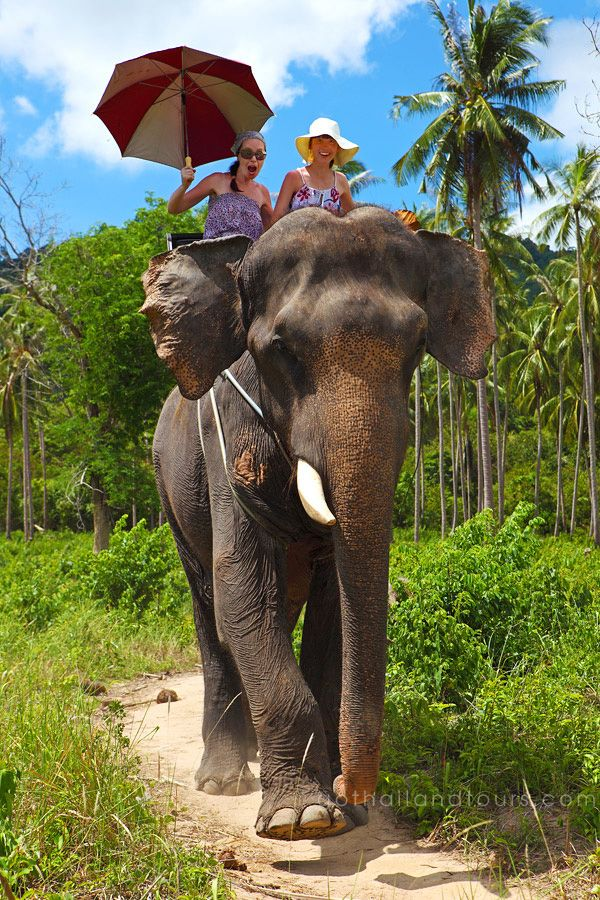 Safari Tour with Elephant Ride, Koh Samui - Thailand http://www.gothailandtours.com/en/thailand/natural-thailand/safari-tour-with-elephant.html