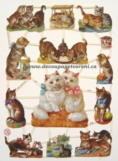 Vzor 48, Kočky 2.