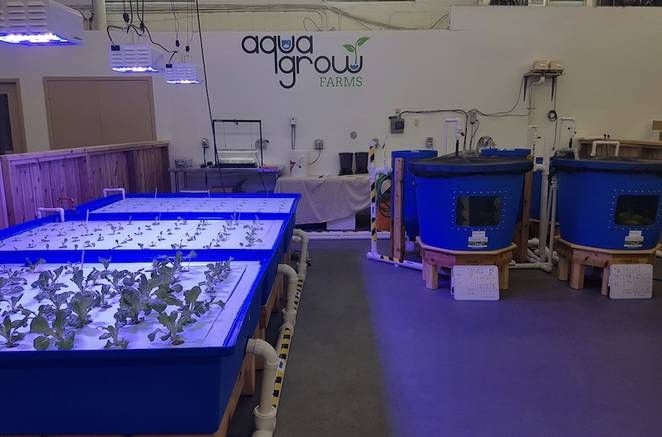 Canadian food bank opens first-ever aquaponics farm... Growing leafy greens and fish indoors year-round is a fabulous solution to the lack of fresh food in many urban centers.