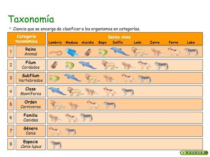 Resultado de imagen de como se clasificacion taxonomica un animal