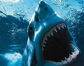 I think someone is having a bad day... Great White Shark