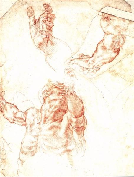 The Study of Adam, 1508 by Michelangelo. High Renaissance. sketch and study
