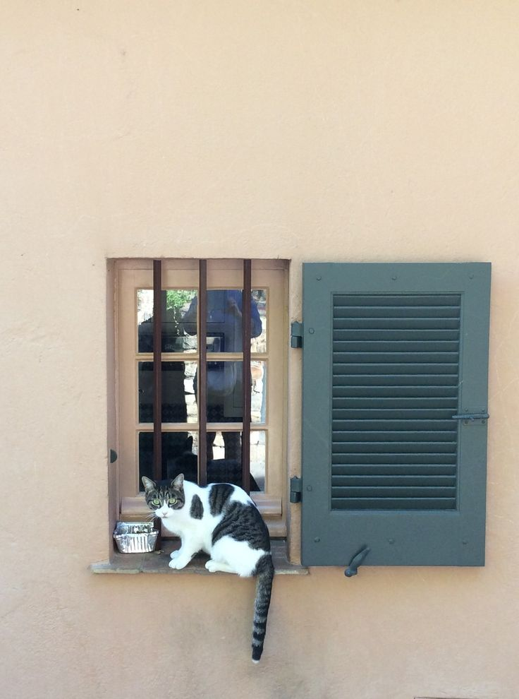 Grimaud is full of cute little cats when you walk around