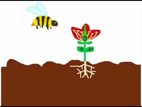 The Magic School Bus episode about plant growth and change. This is an excellent video for teaching the plant life cycle.