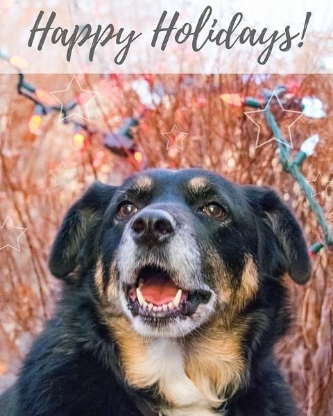 Happy Holidays! Miss Indy and I wish you all many wagging tails, sloppy kisses, puppy dog cuddles, and so much more mutt love in 2018!