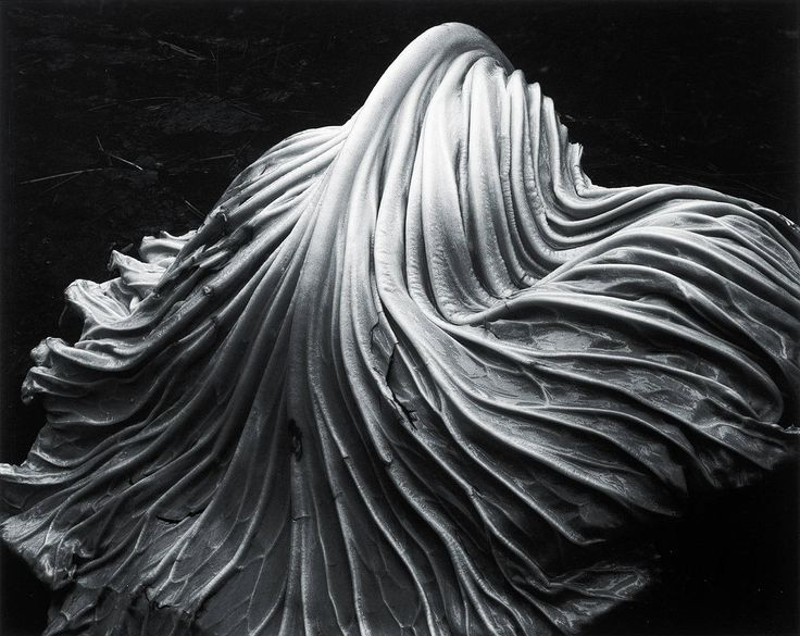 Cabbage Leaf   From a unique collection of still-life photography at https://www.1stdibs.com/art/photography/still-life-photography/