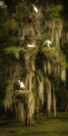 From Lost Seraphine - New Orleans Swamp Spanish Moss Painting always creates a fantastic setting in any story!