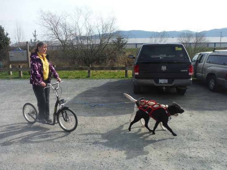 While exploring the Trans Canada Trail we met an Urban Musher.  What a creative way to #getoutsideandplay #doglovers #dogs #transcanadatrail #discoveroutdoors