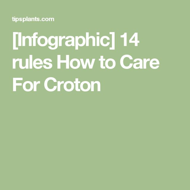 [Infographic] 14 rules How to Care For Croton