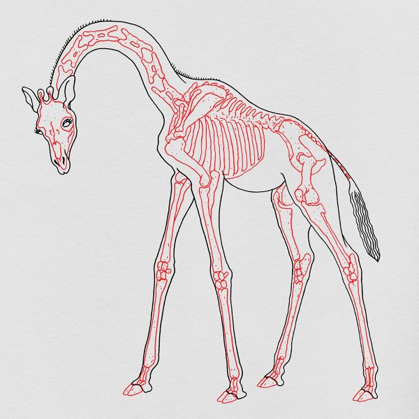 """I would want the giraffe standing starlightsr and with a calmer demeanor on his face , better tail but legs making a """"M"""" shape"""