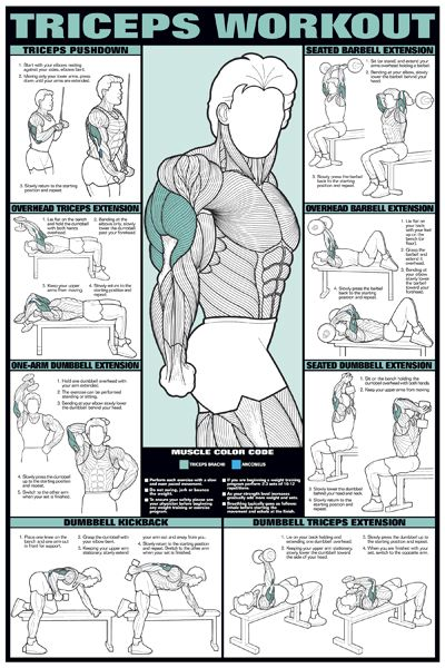 Triceps Workout Professional Fitness Gym Wall Chart Poster