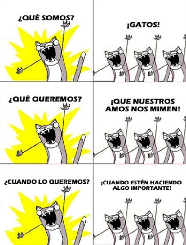 Somos gatos