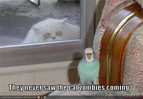 Zombiest of Cats. #Zombie #Lolcats