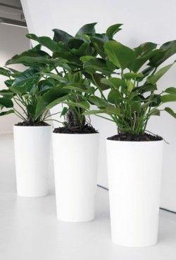 25 beste idee n over kunstplanten op pinterest nep planten terrarium en sappige terrarium - Kantoor decoratie ideeen ...