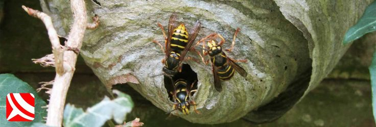 Bristol Wasp Control - Your Rapid, Local Wasp removal and Control Experts in Bristol - Emergency Wasp Control, WaspKill UK