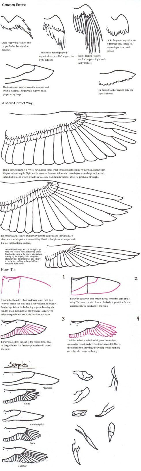 18 best Birds images on Pinterest | Bird, Drawing tutorials and Sketches